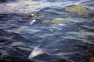 plastic-in-de-oceaan